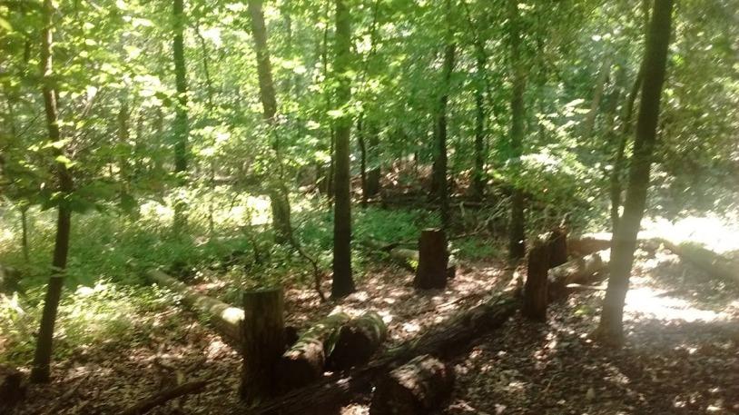 Greenbeltwoods