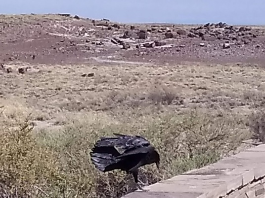 petrified forest crow landing