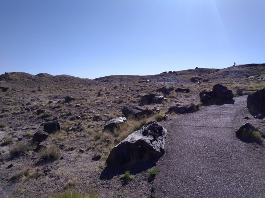 petrified forest loop