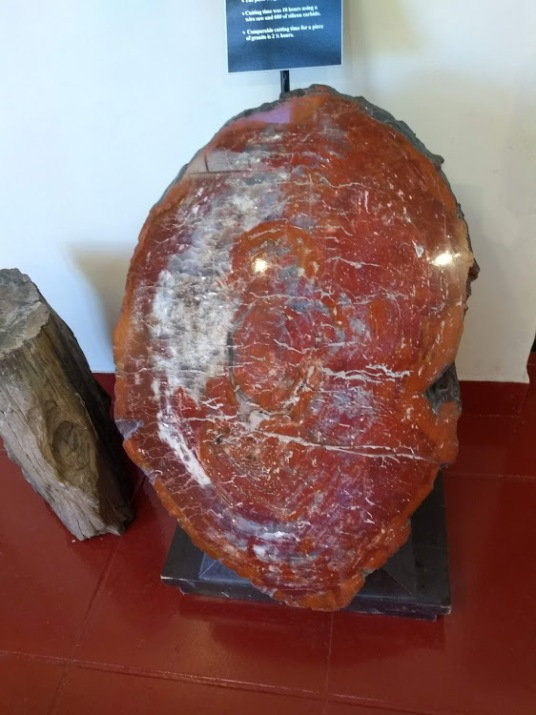 petrified forest sample