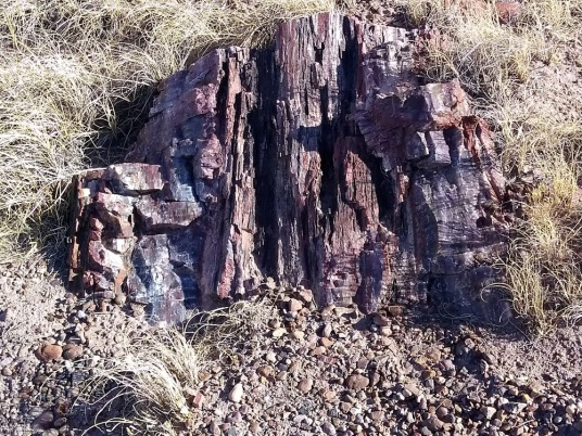 petrified forest trail wood